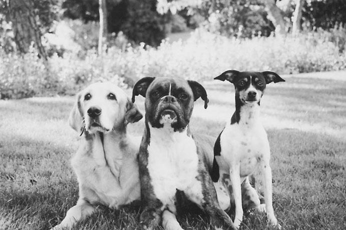 mallon_dogs_010.JPG