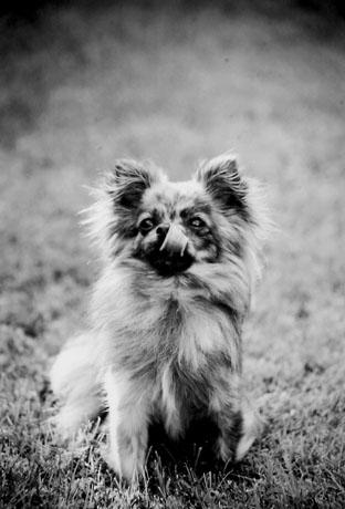 mallon_dogs_008.JPG