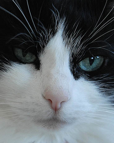 mallon_cats_010.JPG