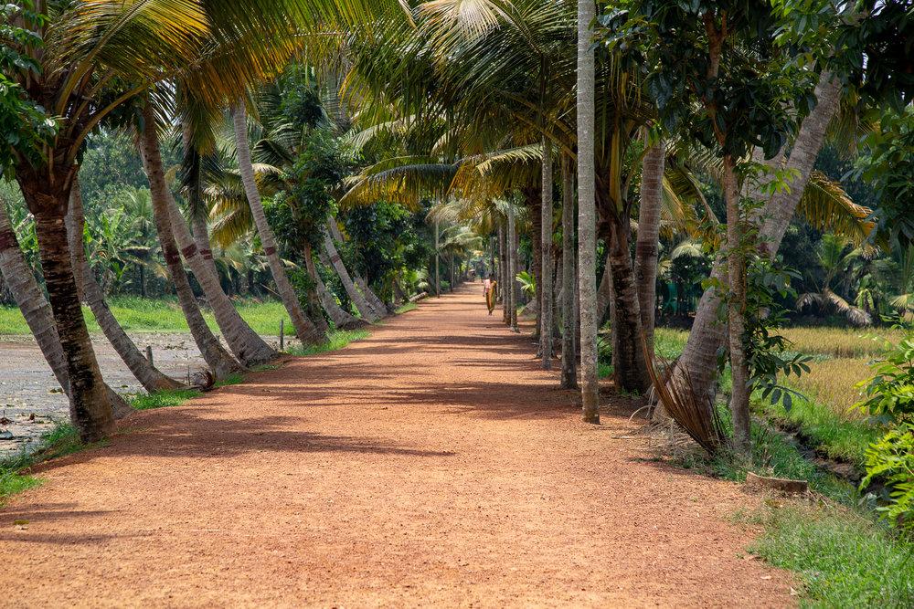 Village walkway through lush palm trees in Kerala, India.