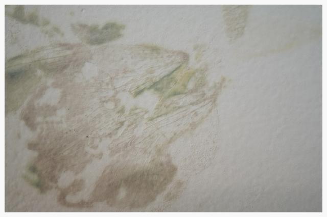tn_480_wallpattern.5.jpg.jpg