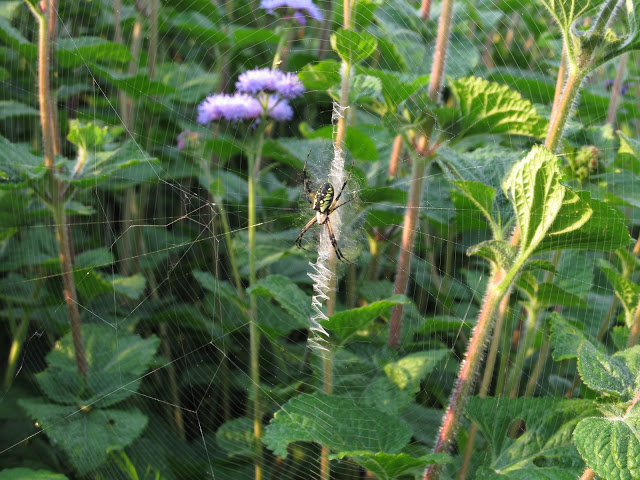 Spiders are a welcome presence in the garden
