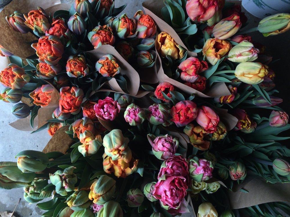 tulip bunches