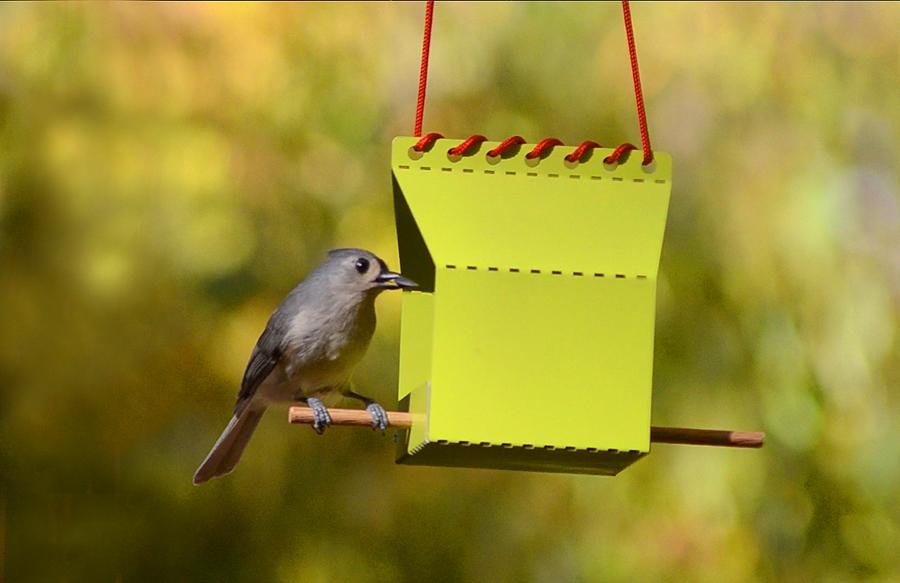 Bird-3s.jpg