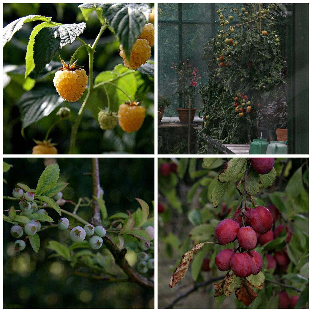 Garden (plums).jpg