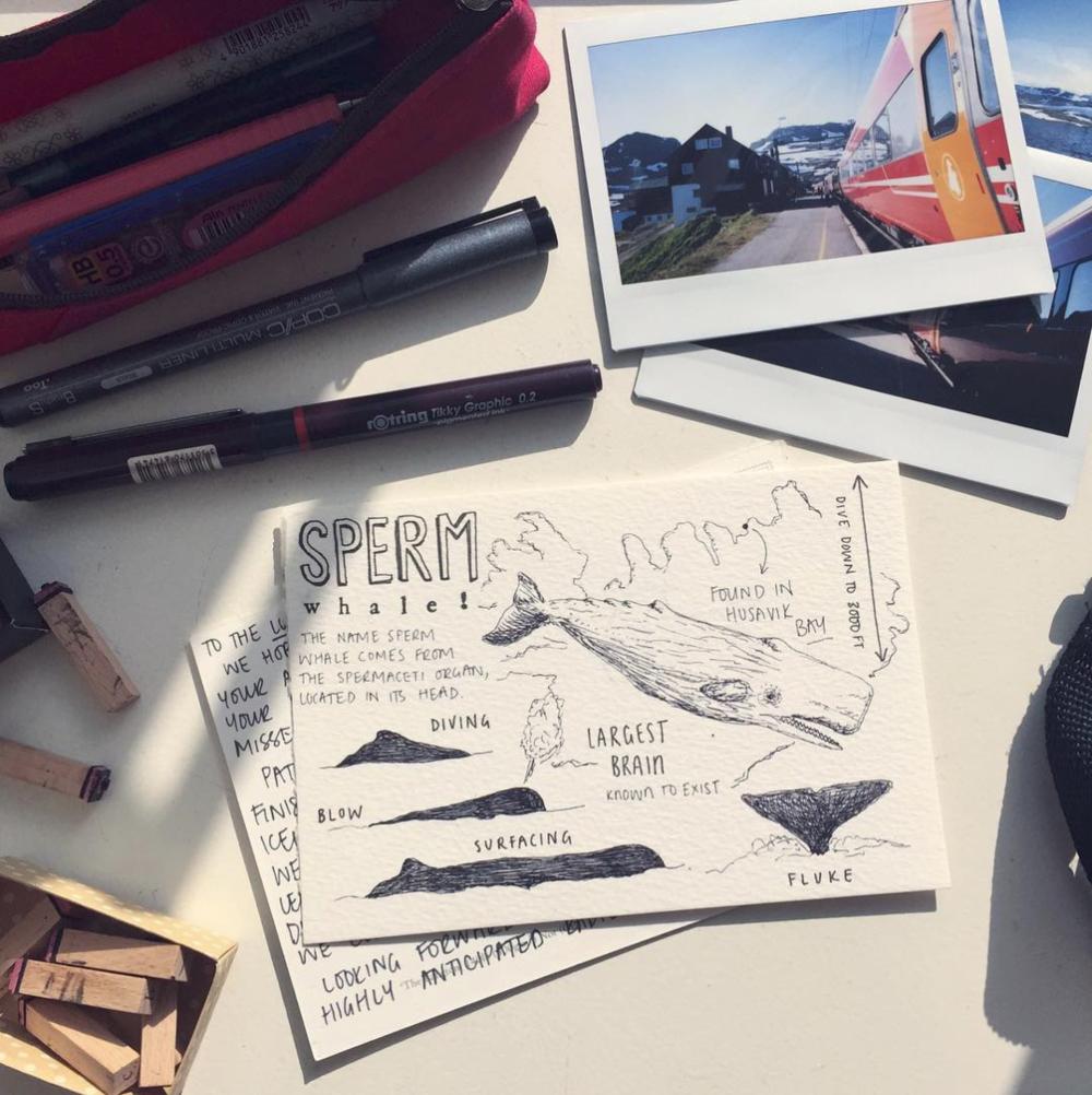 Peita Blythe_Whale Postcard 2.png