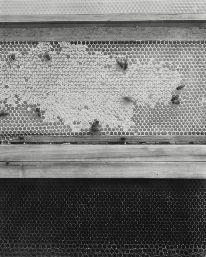 1_Barnes_observe_hive.jpg