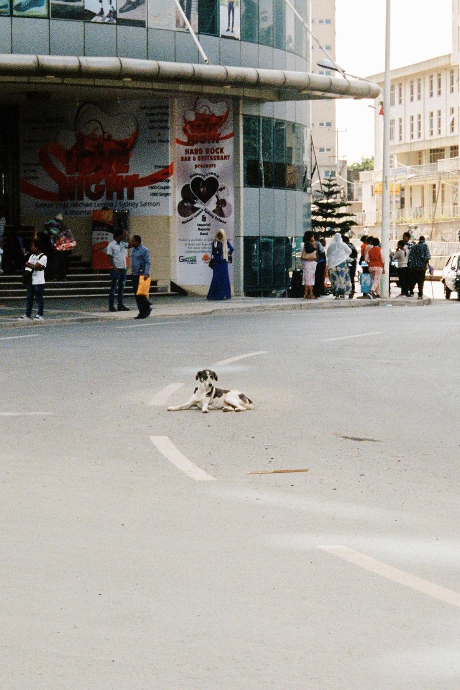 left_dogs.jpg