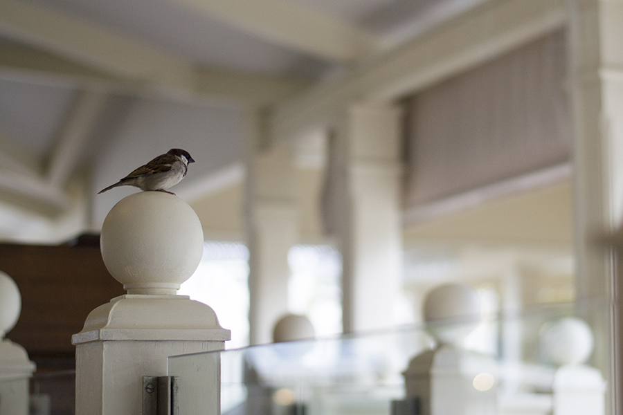 One of the everpresent – and chipper – kestrals perched on a newel post