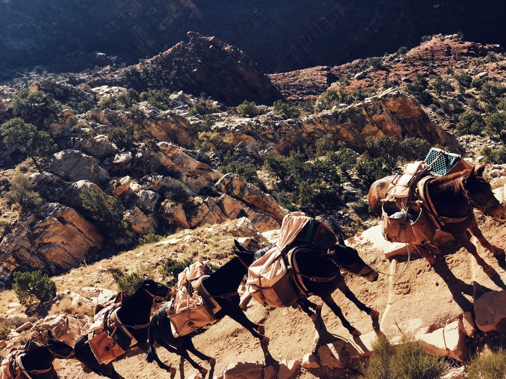 Donkeys carrying supplies through the canyon