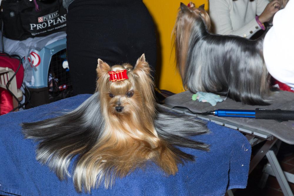 Dogs-1283.jpg