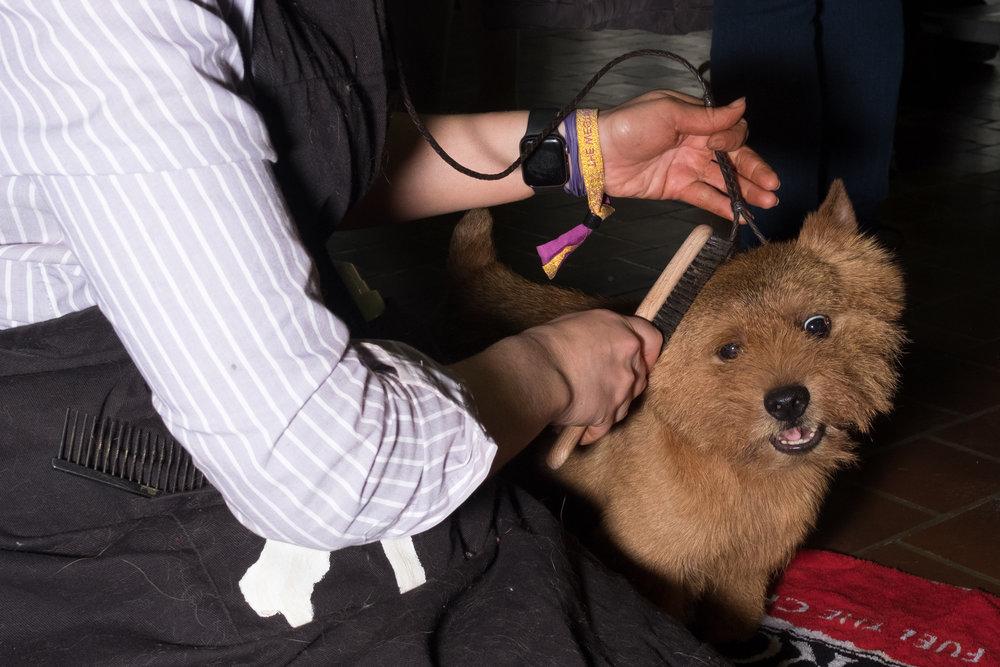 Dog-Show-4539.jpg