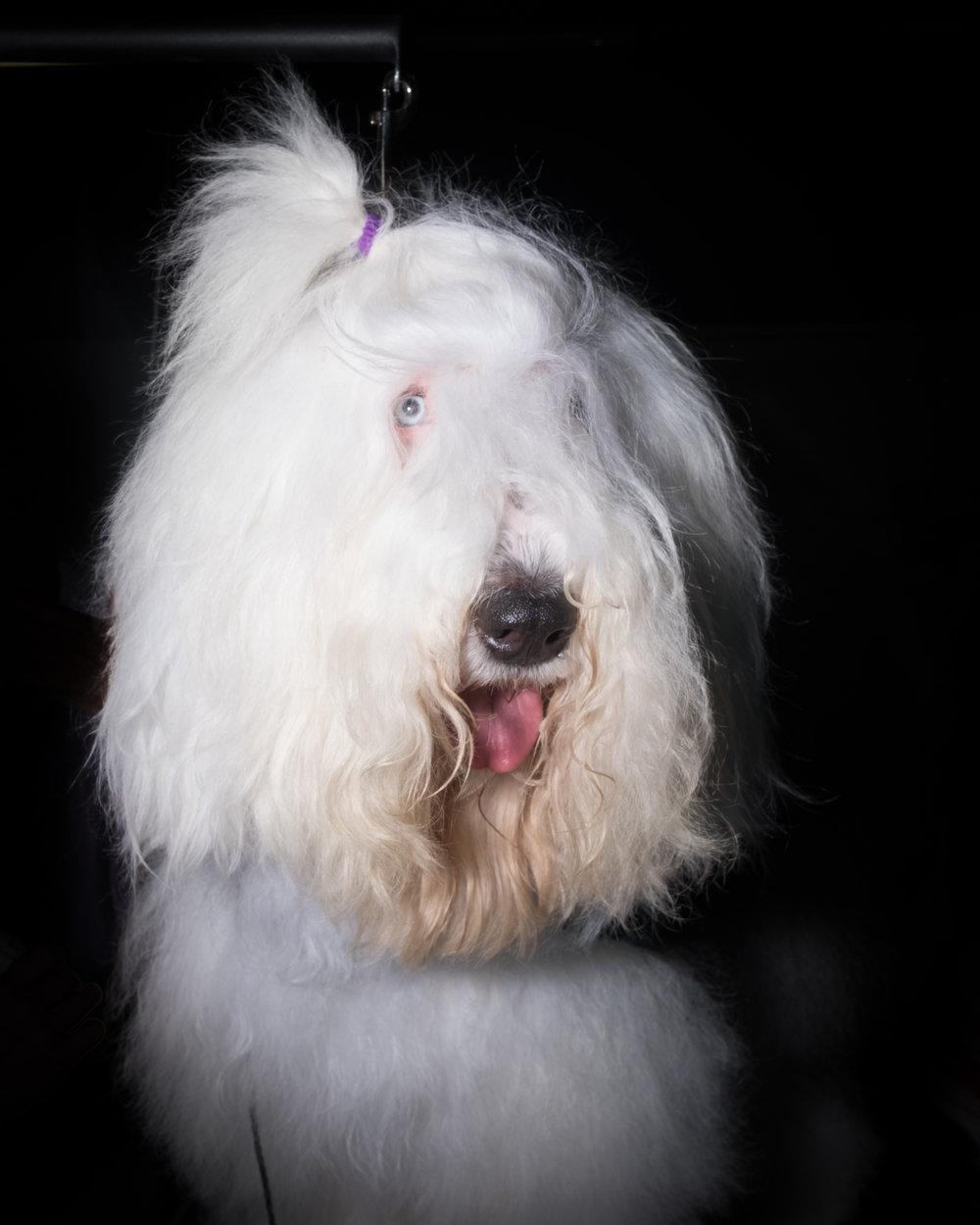Dog-Show-4341.jpg