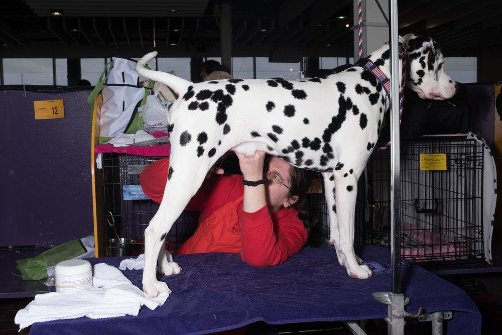 Dog-Show-4288.jpg