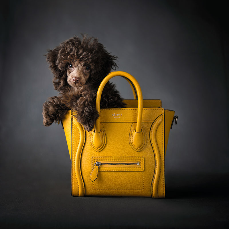 Céline works for everyone! And color is always key.