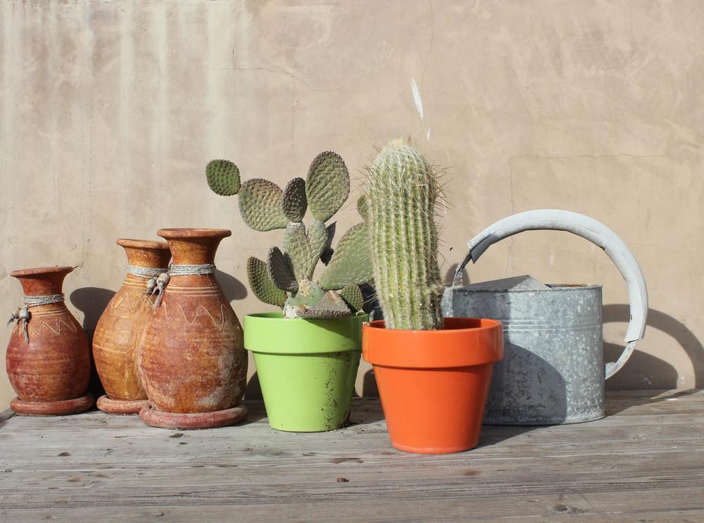 Cactus Porch.jpg