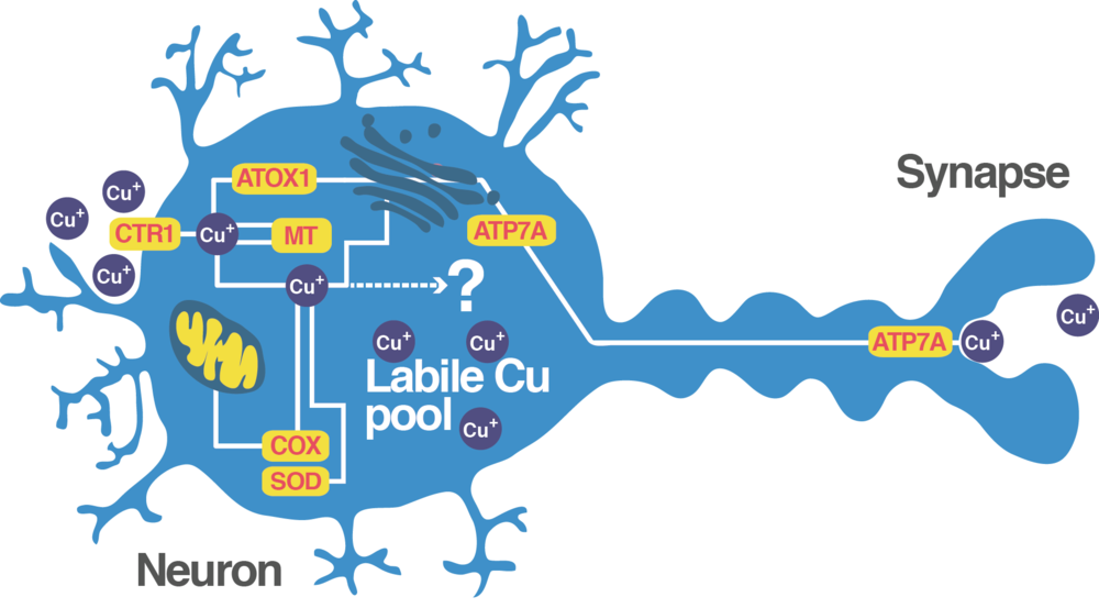 blue_neuron.png