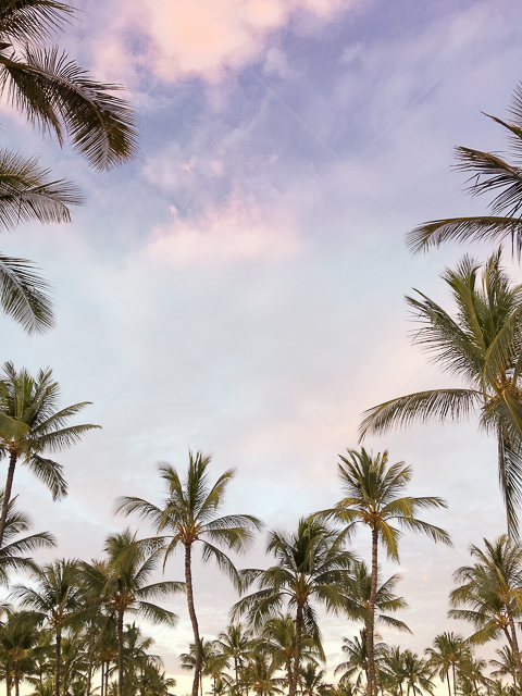 samples-haute-chocolate-styled-stock-photography-tropical-vibes-1.jpg