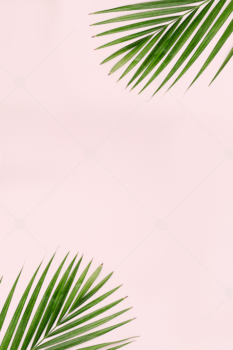 samples-haute-chocolate-styled-stock-photography-tropical-vibes-12.jpg