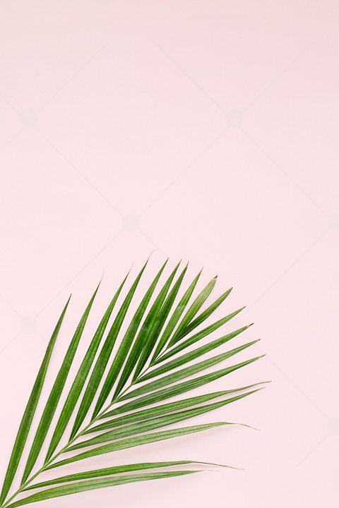 samples-haute-chocolate-styled-stock-photography-tropical-vibes-13.jpg