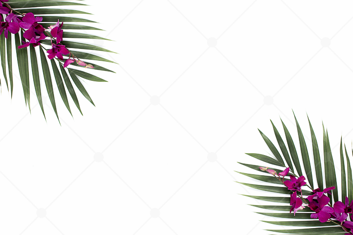 samples-haute-chocolate-styled-stock-photography-tropical-vibes-37.jpg