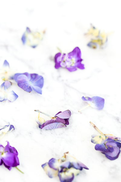 haute-stock-photography-ultra-violet-11.jpg