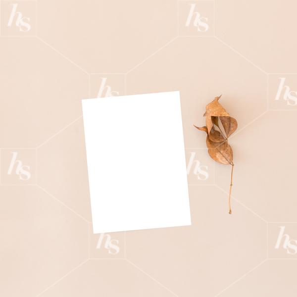 haute-stock-photography-falling-leaves-final-5.jpg