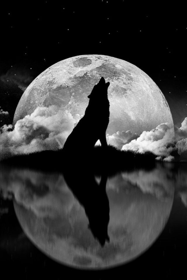 Image result for wolf moon