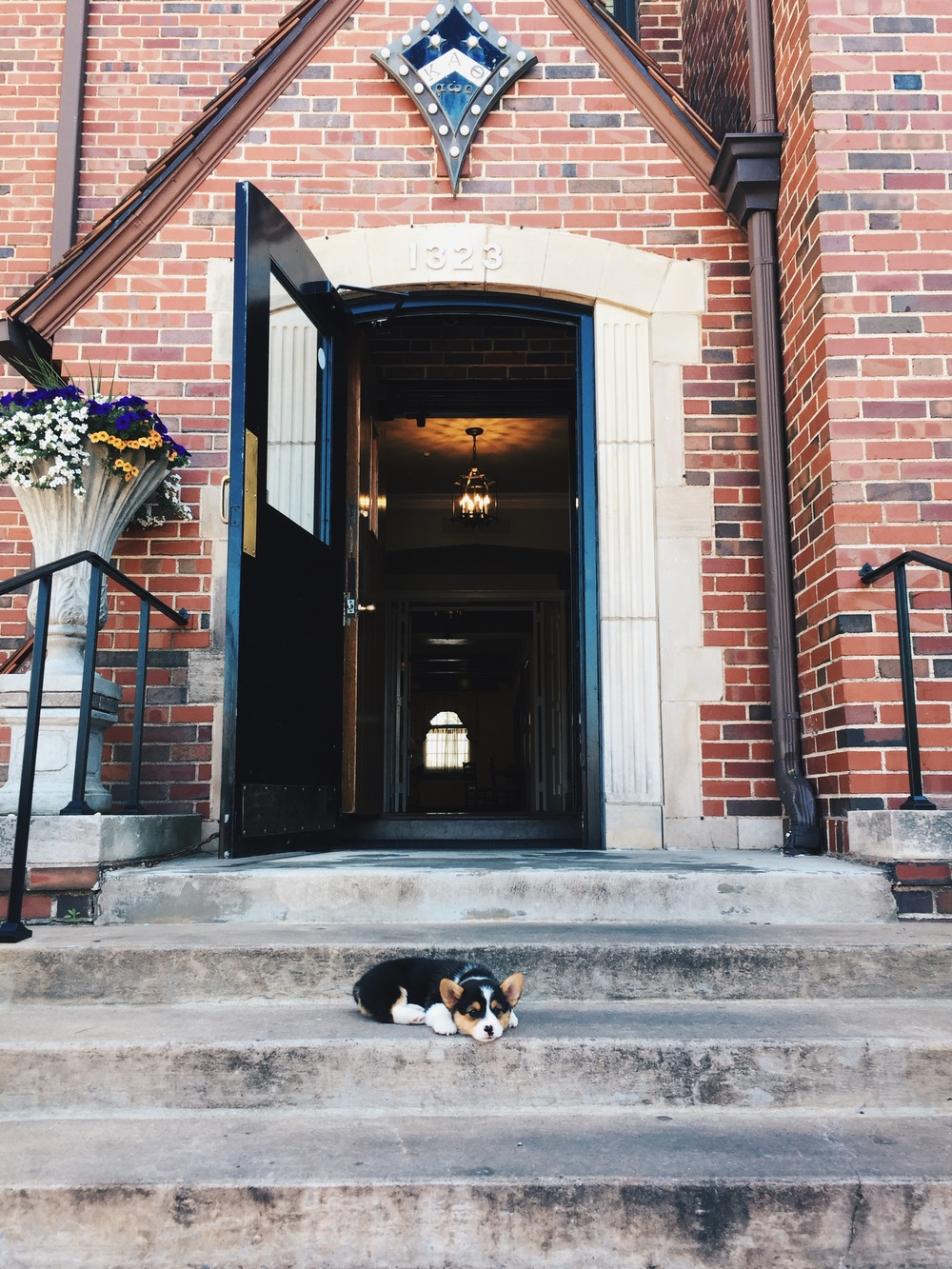 Hank came to visit Stillwater and gave us this perfect photo opportunity. He knows what I like.