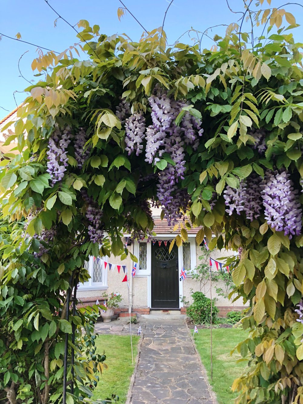 Windsor, Berkshire, England, UK, Royal Wedding, Wisteria