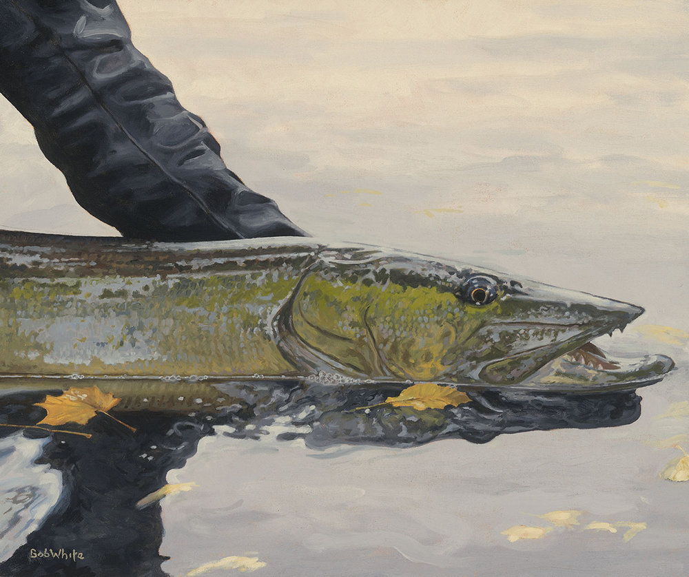 """One Last Look - Musky""    by Bob White.   The grand prize winner will take home this 24"" x 20"" print signed by Bob White and John Gierach."