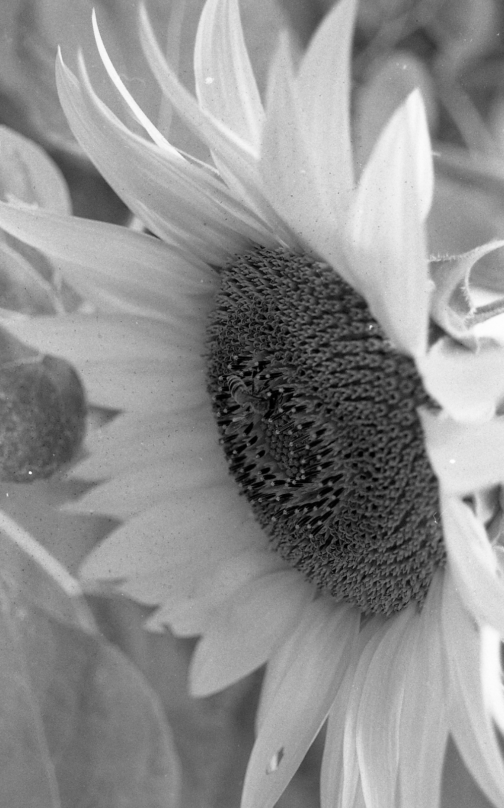 little bee. 35mm.