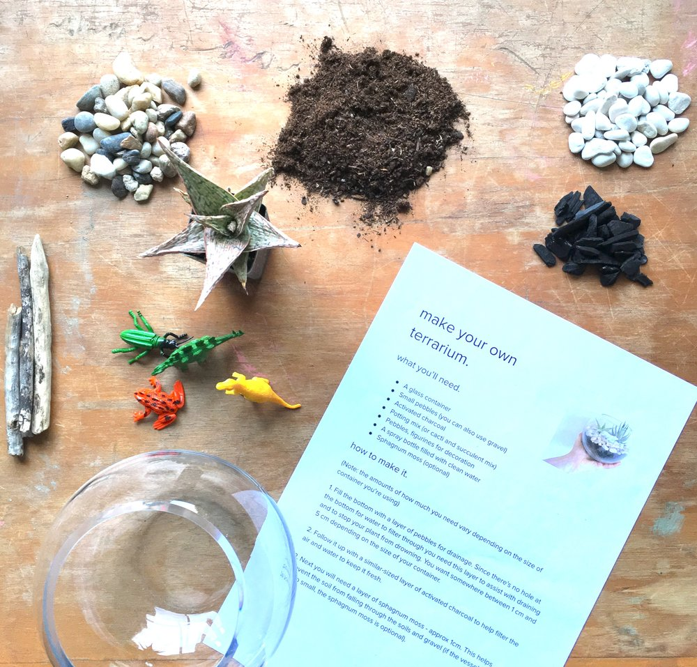 Make Your Own Terrarium Kit Tiny Paradise