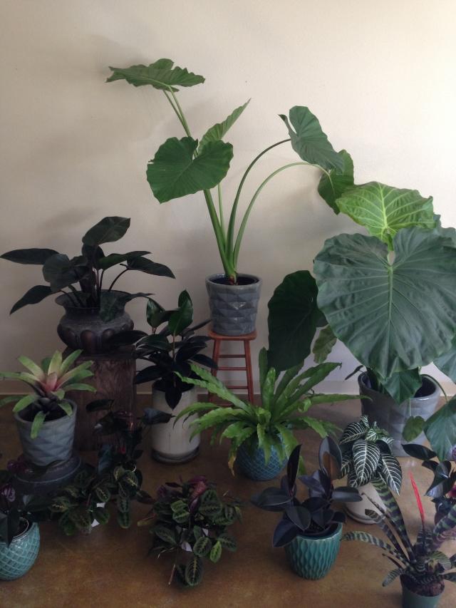 Venn Floral Plant Sale