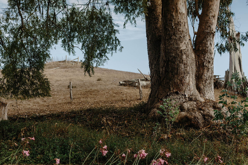 West Marin wedding at Straus Home Ranch on the Tomales Bay with Venn Floral and Levi Tijerina.