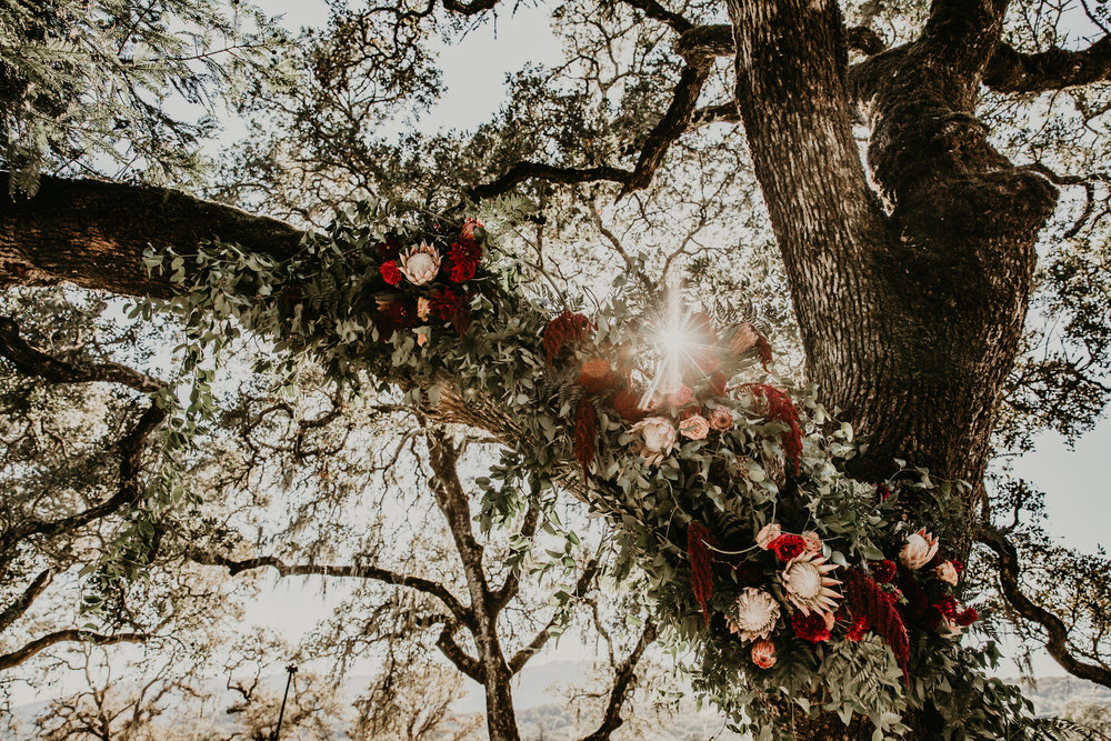 Wedding ceremony flowers by Venn Floral at Beltane Ranch. Photography by Vera Frances in Glen Ellen, California with Whitney Nelson Events and Park Avenue Catering. Moody blush and burgundy floral palette with king protea, garden roses, amaranth, wild greenery and vines.