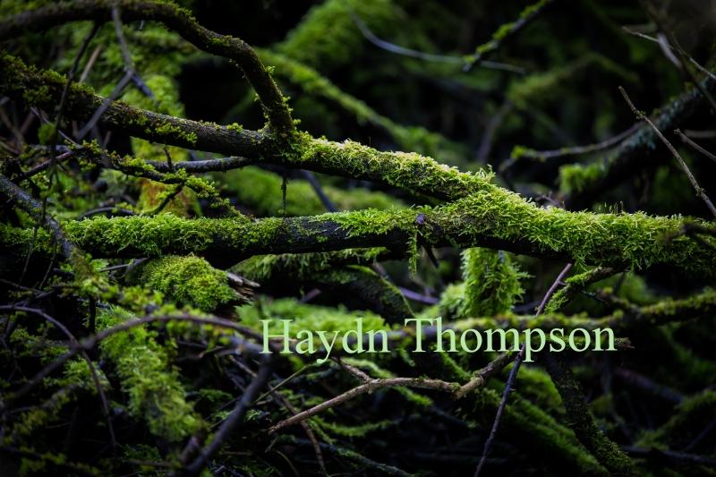 Moss on Woods.jpg