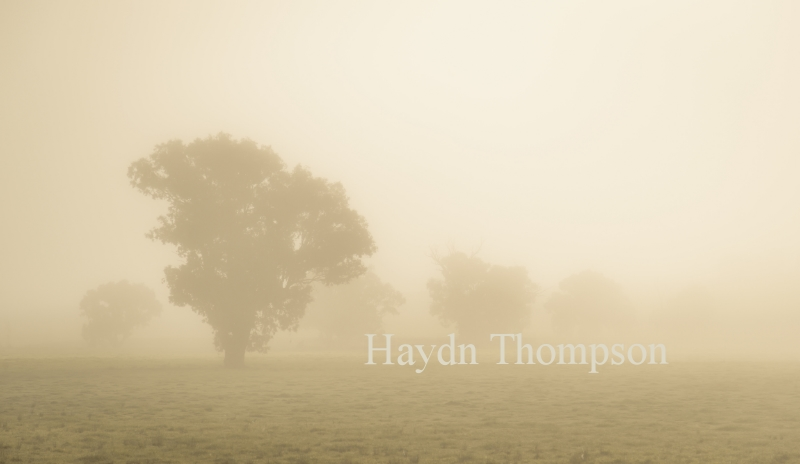 Field of Mist.jpg