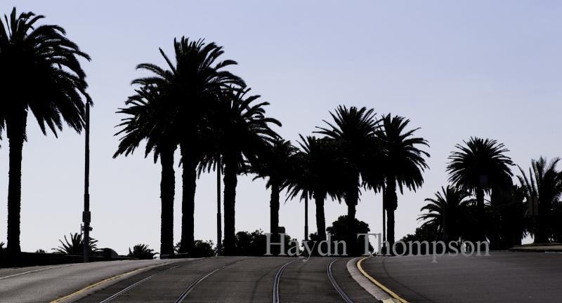 St Kilda Palms - Esplanade.jpg