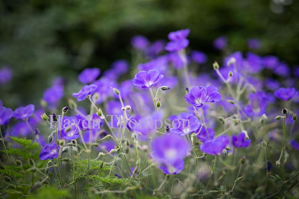 Colour Bloom