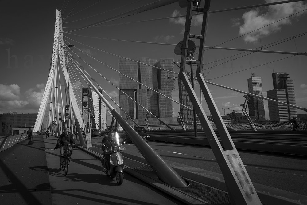 Rotterdam Life