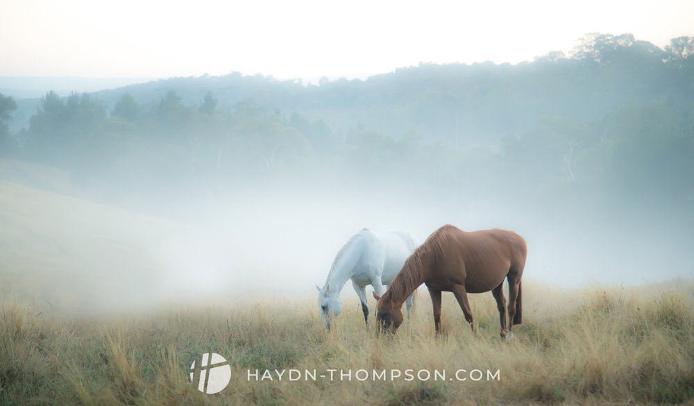 Horses In The Warrandyte Valley (Misty) (Small Size - Watermark).jpg