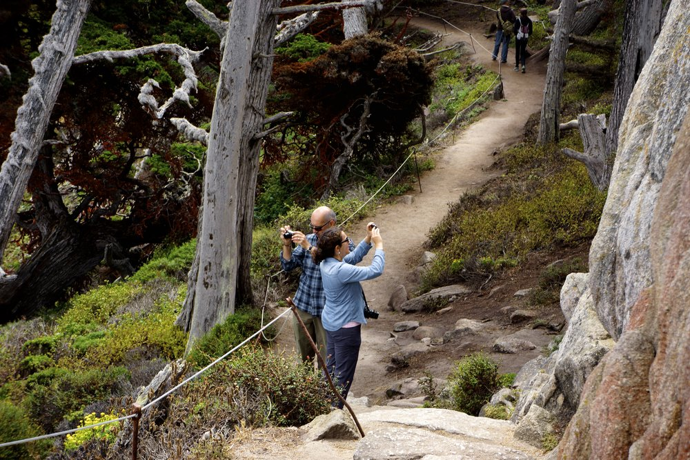 A couple photographs the landscape of Point Lobos State Natural Reserve.