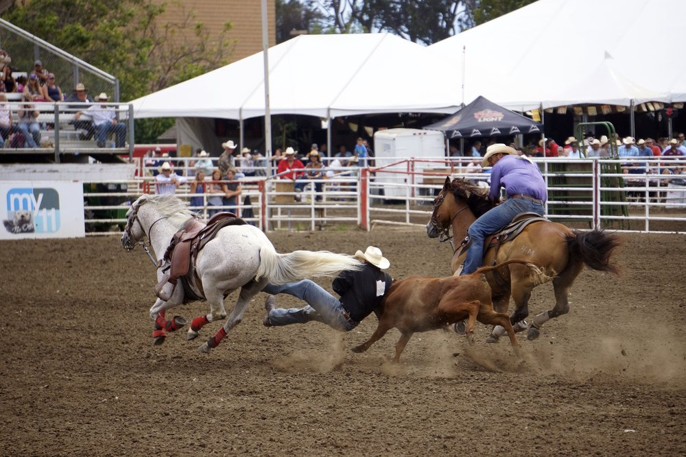 A cowboy gets dirty during Sunday's steer wrestling at the 2015 Salinas Rodeo.