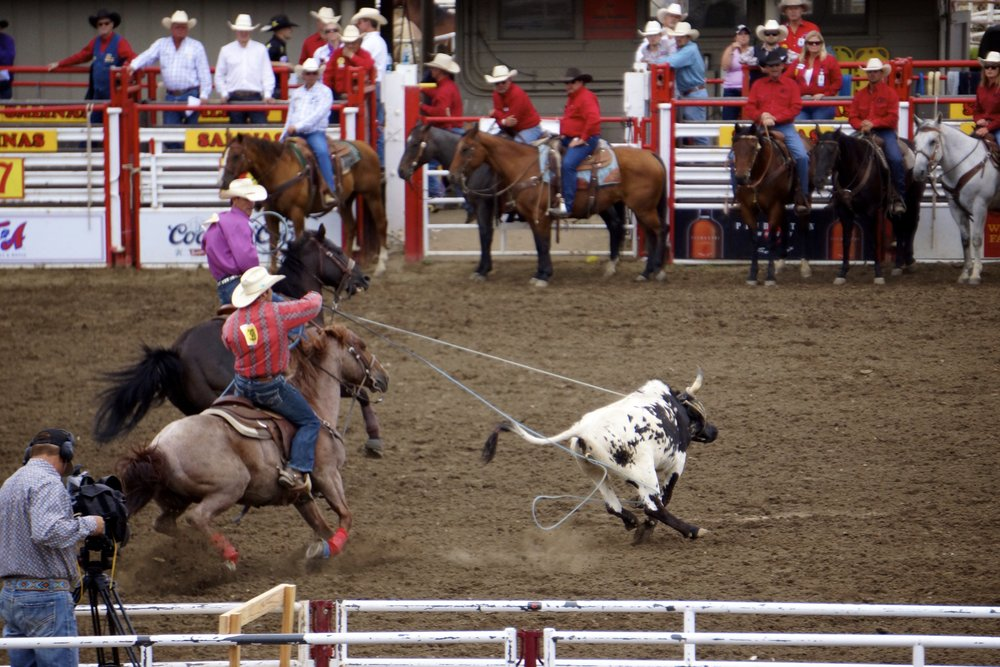 Two riders coordinate their efforts in team roping competitions on Sunday.