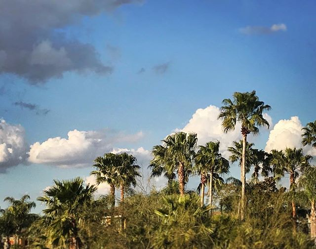 #beautifulweekend #palmtrees #🌴 #texas #iphonephotography