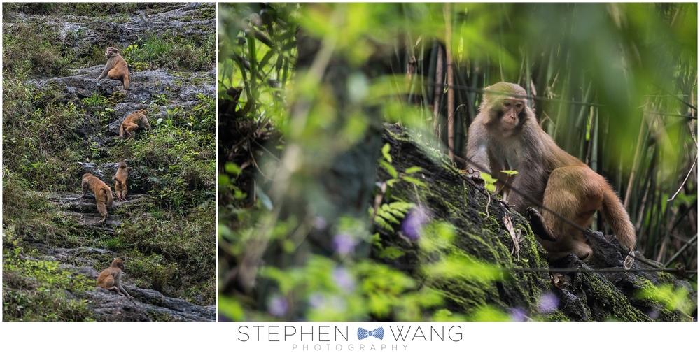 ...wild monkeys!