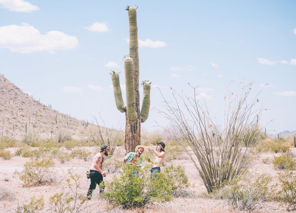 DesertBaboons.jpg