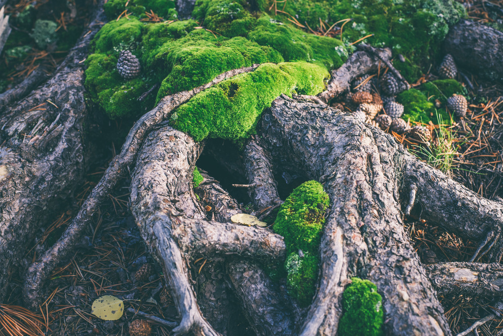 KenoshaFall(moss).jpg
