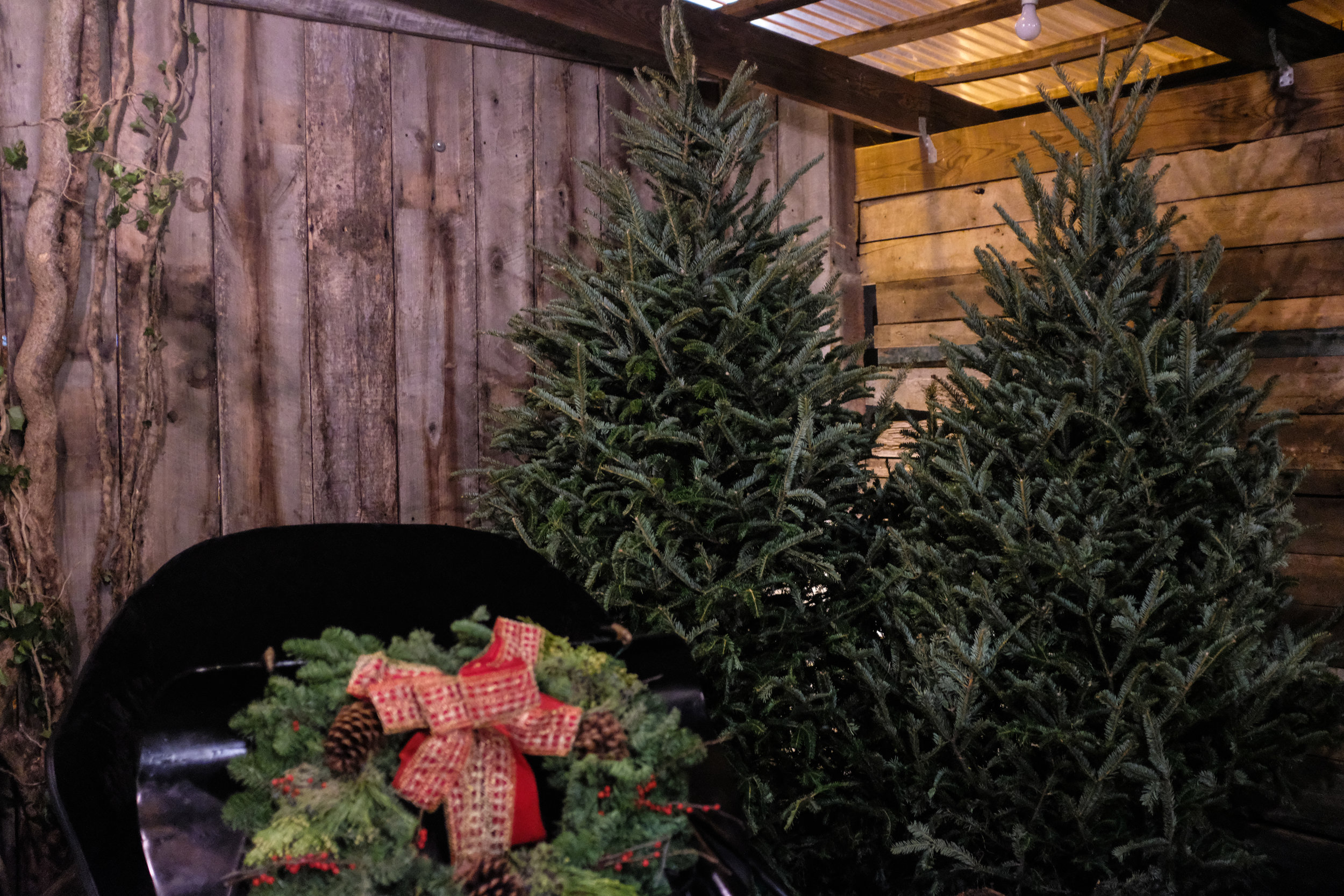 A Kentucky Christmas Moment — FOLK